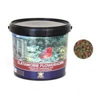Zlatamorie Flowerhorn 3kg