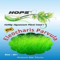 Akvaryum Bitki Tohumu  Eleocharis Parvula 12 li