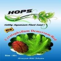 Akvaryum Bitki Tohumu  Ceratophyllum Demersum-Red 12 li