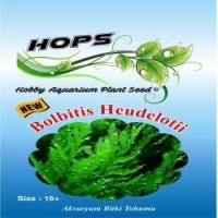 Akvaryum Bitki Tohumu  Bolbitis Heudelotii 12 li