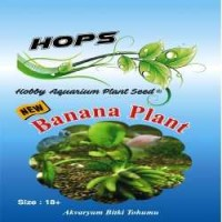 Akvaryum Bitki Tohumu  Banana Plant 12 li
