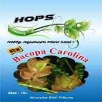 Akvaryum Bitki Tohumu  Bacopa Carolina 12 li