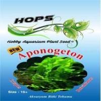 Akvaryum Bitki Tohumu Aponogeton - Crispus/Boivinianus 12 li