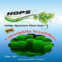 Akvaryum Bitki Tohumu Limnophila Sessiliflora 12 li