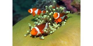Deniz Akvaryumu Kurmanın Önemli Noktaları